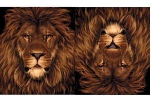 cola de leon cabeza de ratón
